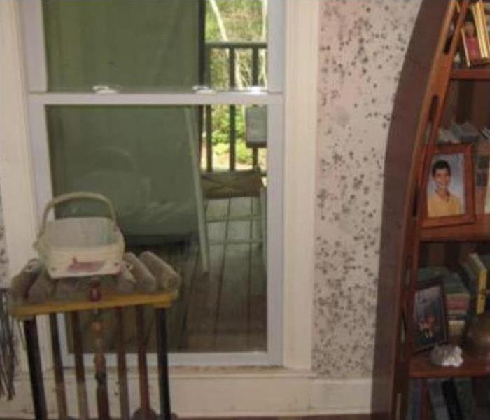 Severe mold growth on the walls of a home